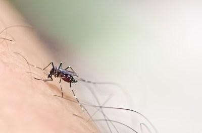 Mosquito Tones